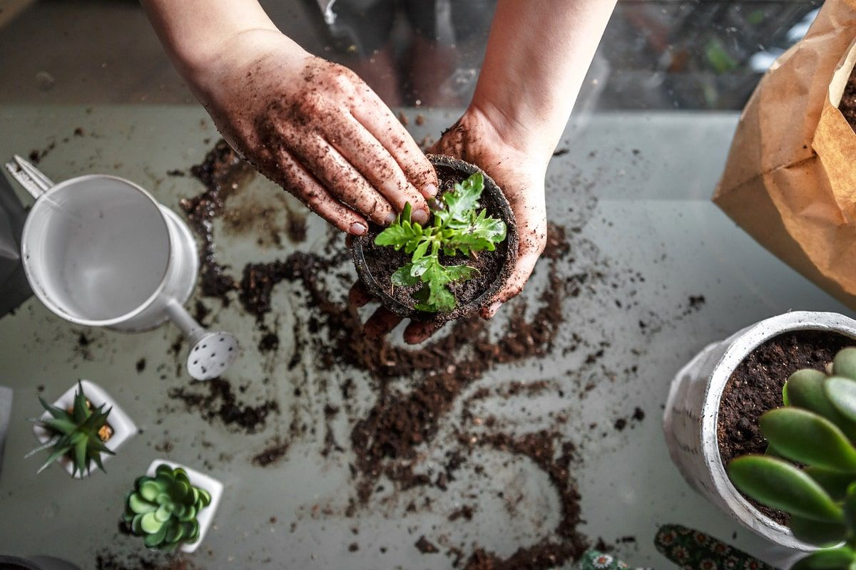 Why gardening is good for your mental health post-pandemic